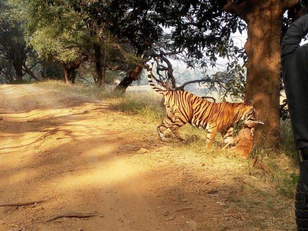 Spécialiste des voyages organisés en Inde au Rajasthan